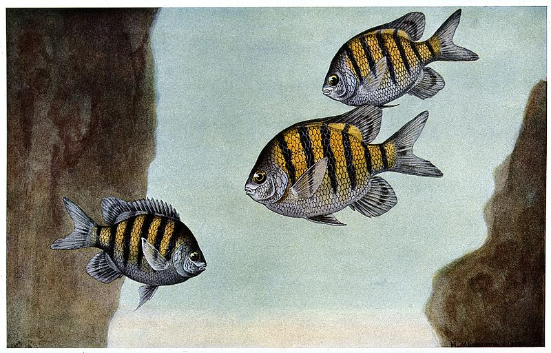 800px-three_fish_at_the_bottom_of_the_sea-_colour_line_block_after_wellcome_v0022086
